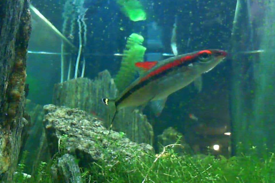 Виртуальный аквариум в режиме реального времени