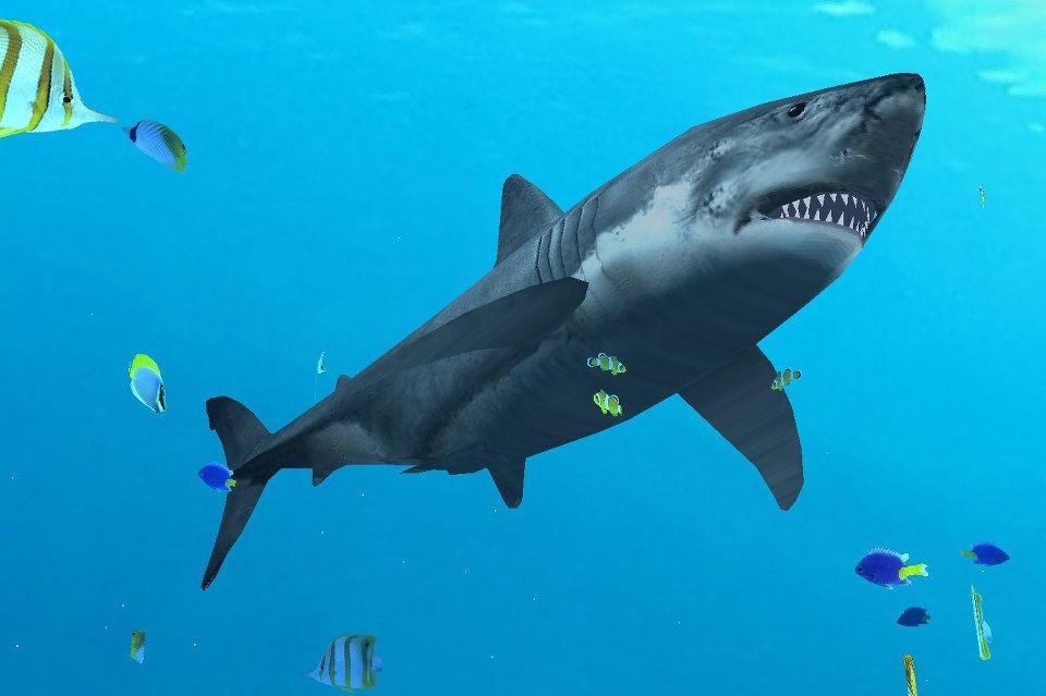 Коралловые рифы и анимированная акула