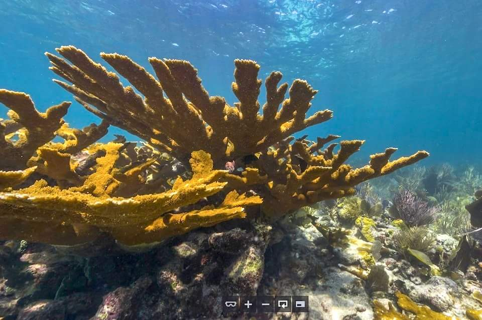 Коралловые рифы на панорамах 360°