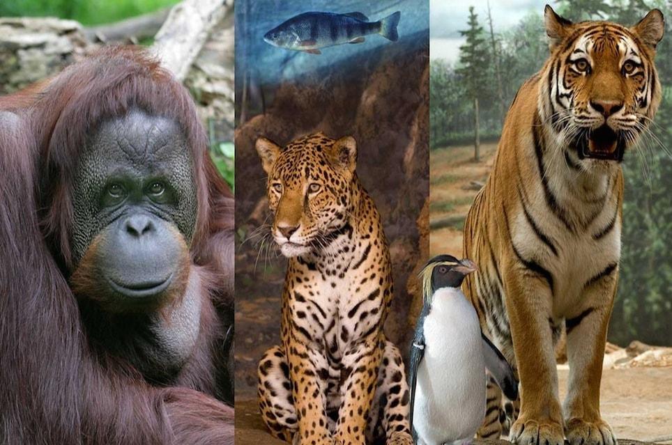 Веб-камеры зоопарка Milwaukee в реальном времени