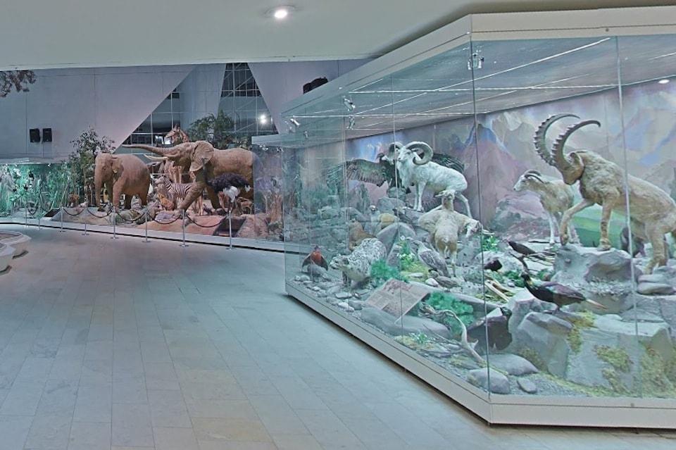 Виртуальный тур в Государственный Дарвиновский музей
