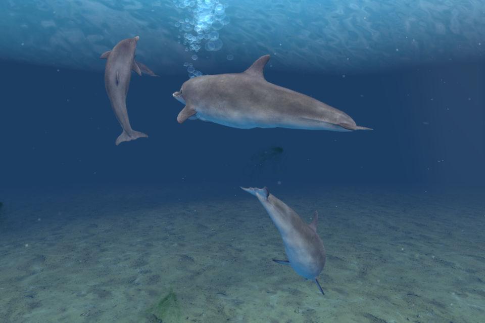 Дельфины в море