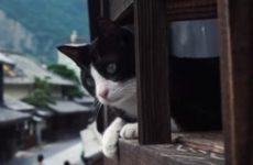 Интерактивный проект Cat Street View