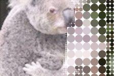 Картинки коал